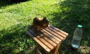 Белка-на-стульчике