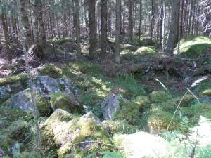 Камни в лесу