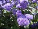 Наантали-цветы1