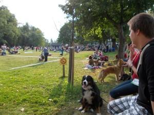 кемпинг-выставка-собак