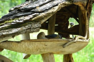 ptichka-v-kormushke
